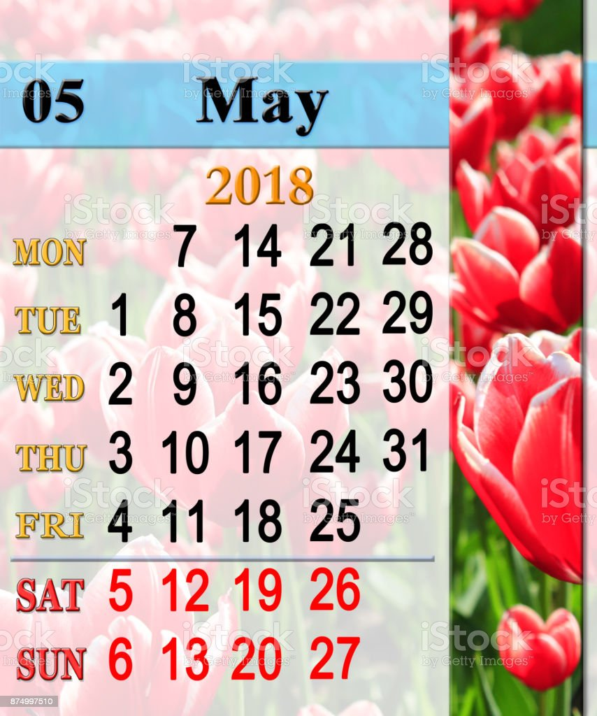 calendar for May 2018 with tulips on the flower-bed stock photo