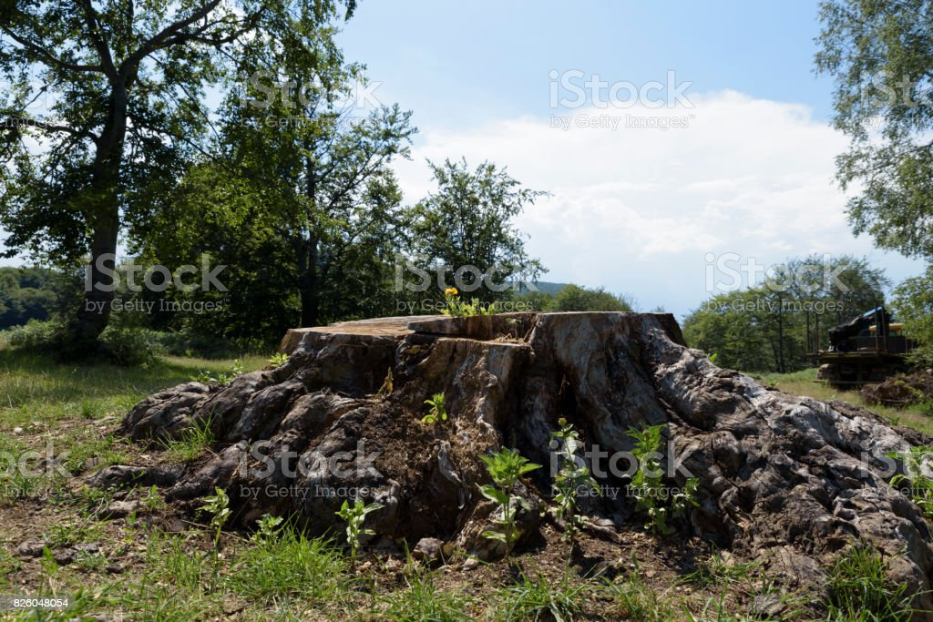 Calendula blossomed on a log stock photo