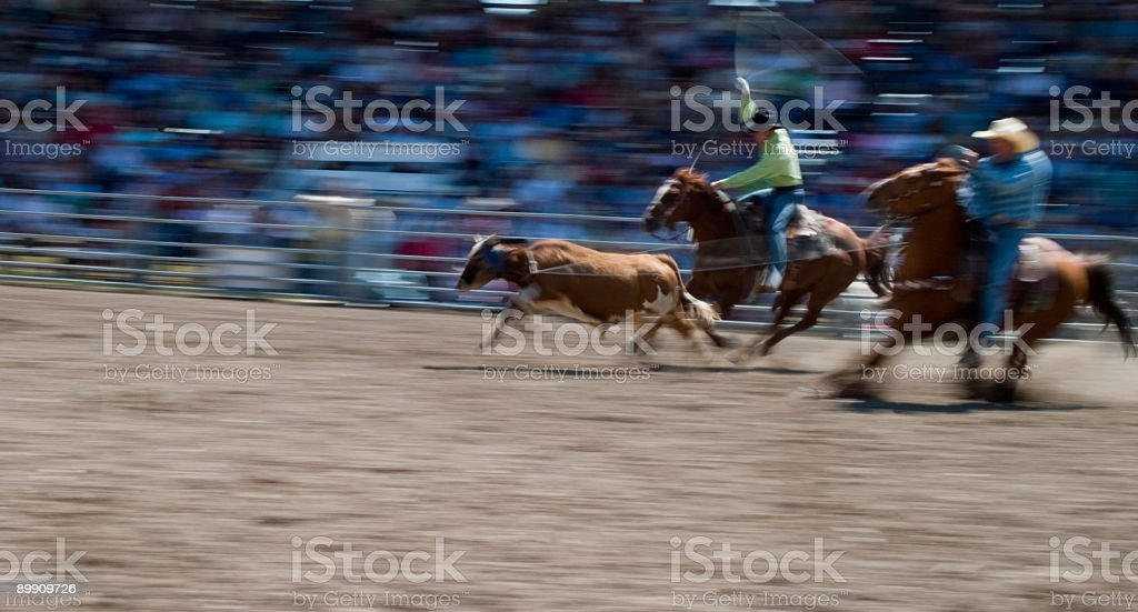 Calf Ropeing royalty-free stock photo