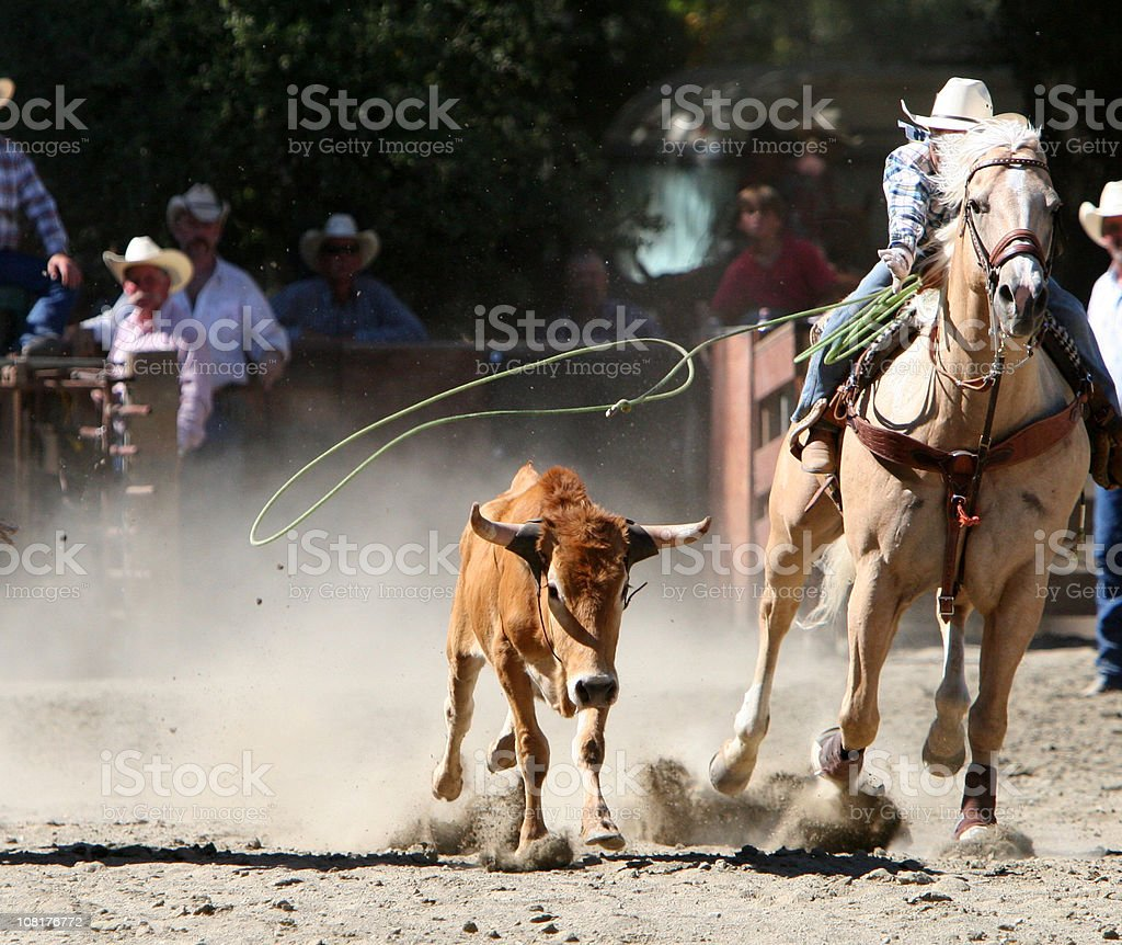 Calf Roping Action stock photo