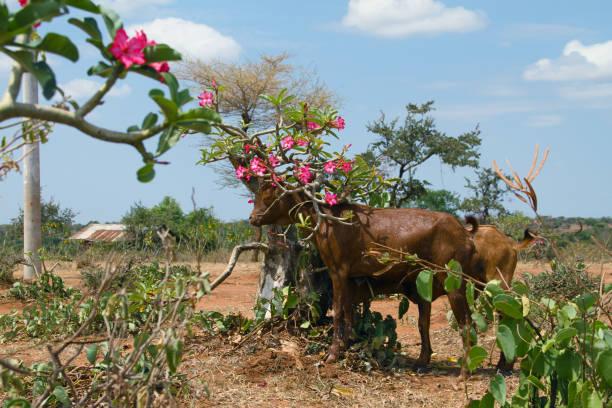 Calfs Under Shade stock photo
