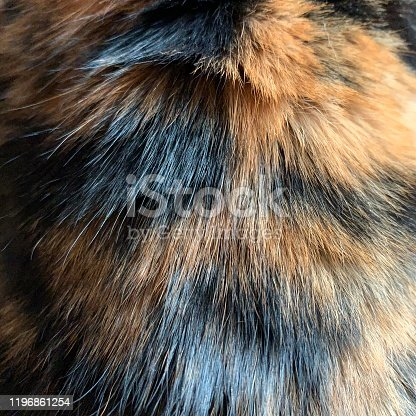 Fur on back if Calico cat
