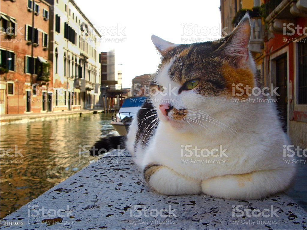 calico cat on stone wall beside Venice canal stock photo