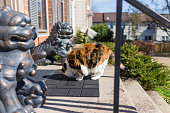 Calico cat walking smelling door mat outside of house by lion statues at entrance to townhouse home on sunny day in Virginia, USA