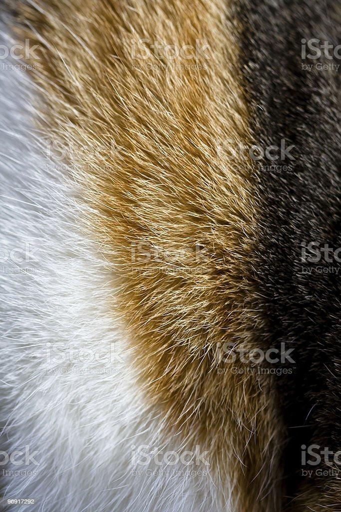 Calico Fur royalty-free stock photo