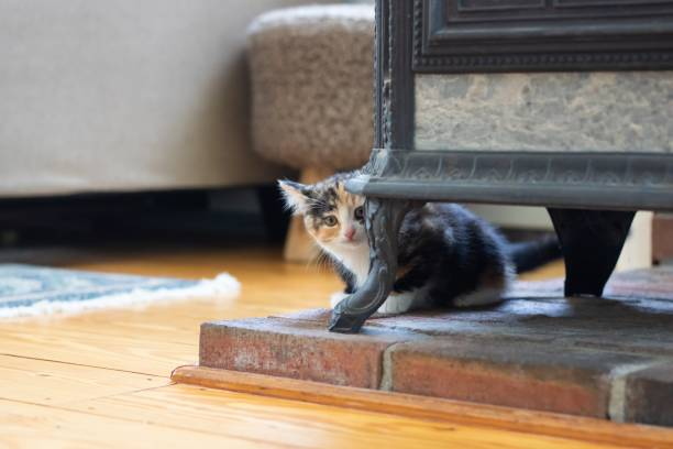 Calico kitten hiding Shy calico kitten hiding behind leg of wood burning stove scared cat stock pictures, royalty-free photos & images