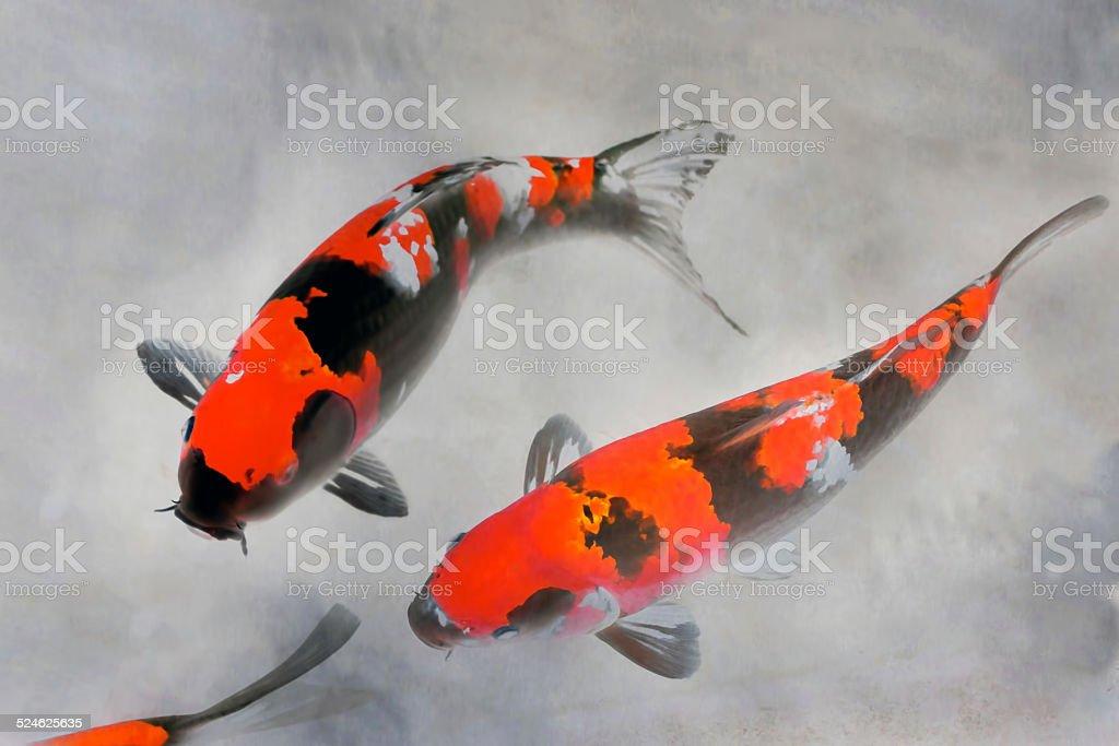 Calico Koi Fish Watercolor Illustration stock photo