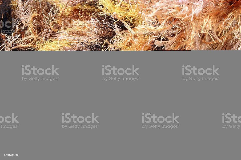 Calico stock photo