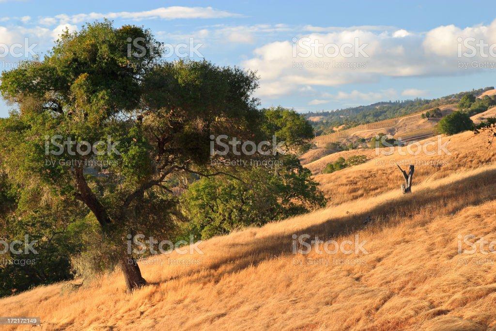 California Autumn royalty-free stock photo
