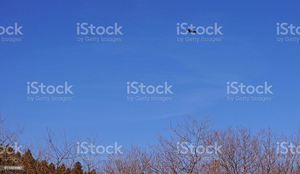 California Blackhawk Flight stock photo
