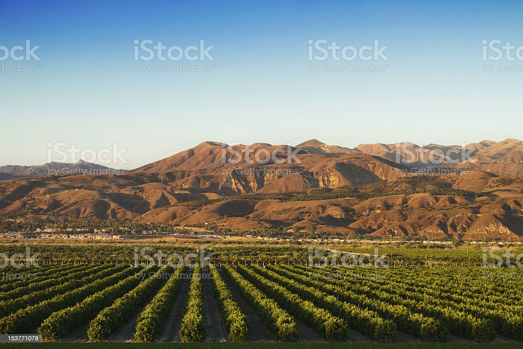 California Citrus Groves stock photo