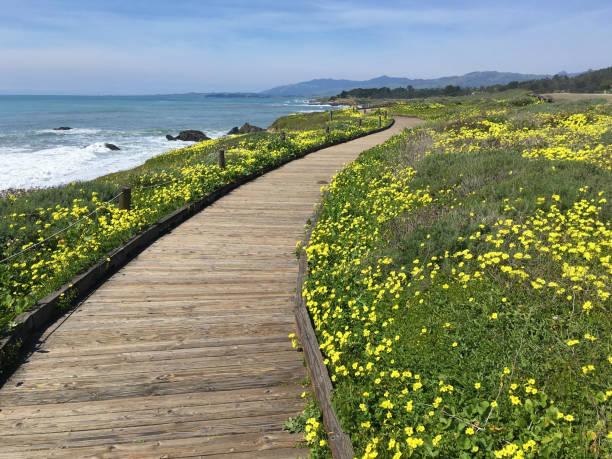 California Coast XXXII stock photo