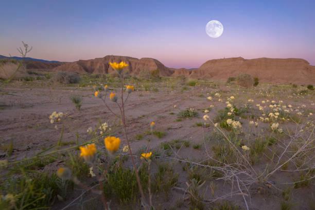 California Desert Moonrise Moonrise in Anza Borrego Desert State Park, CA mojave desert stock pictures, royalty-free photos & images