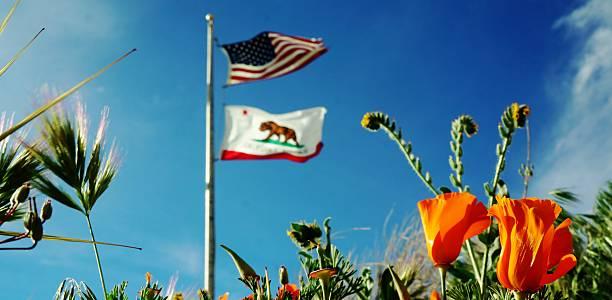Bandera de California y California amapola - foto de stock