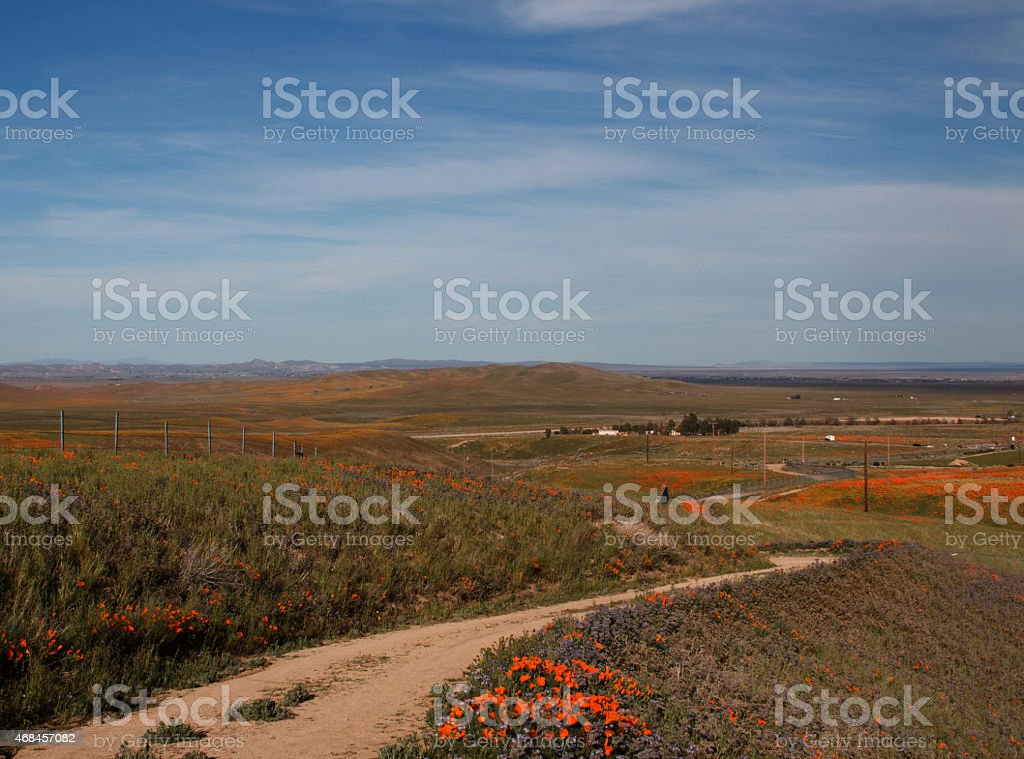 California Golden Poppies along road down to Antelope Valley stock photo