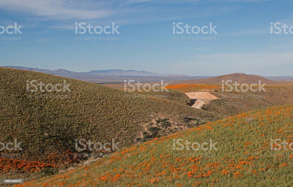 California Golden Poppies on rolling high desert hills stock photo