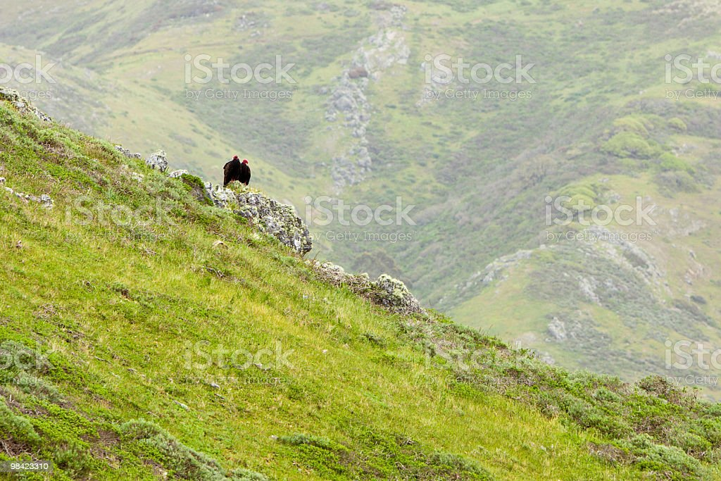 California Landscape with Vultures royalty-free stock photo