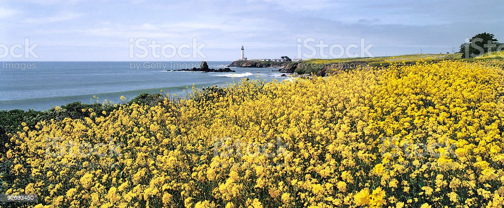 California Lighthouse and Mustard Flowers stock photo