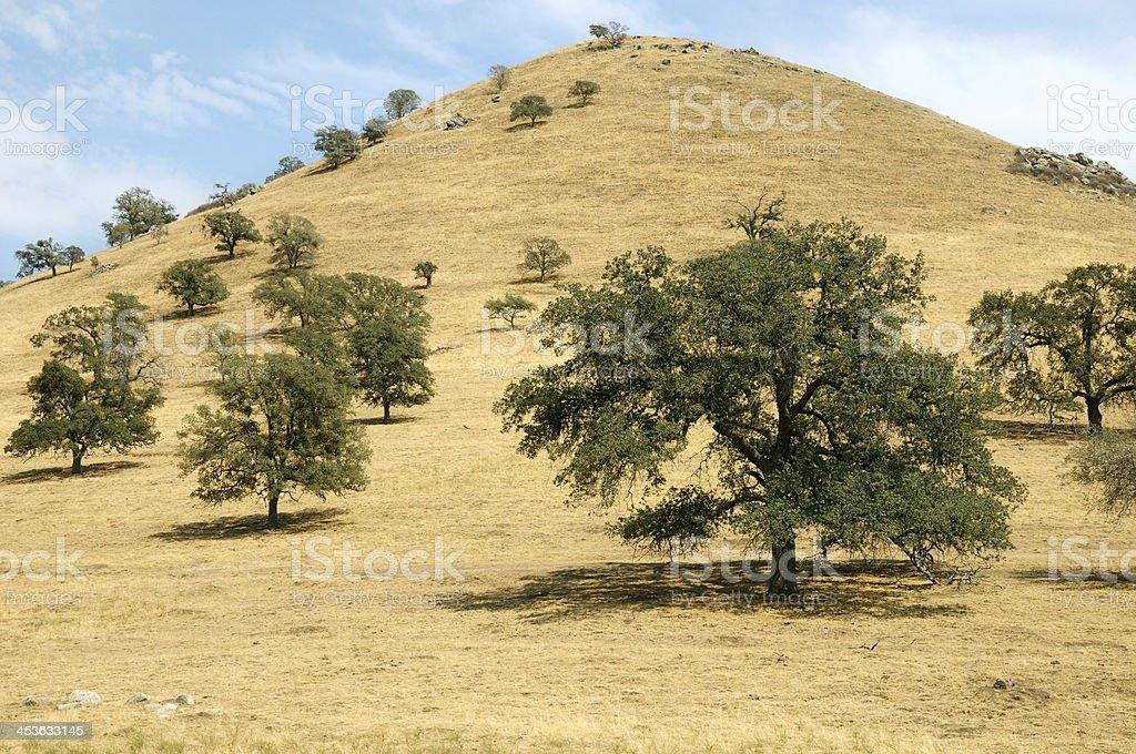 California Oak Woodland stock photo