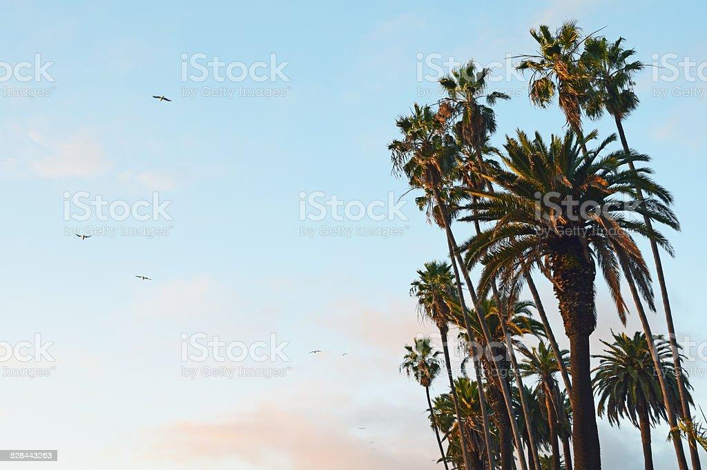 palmier istock