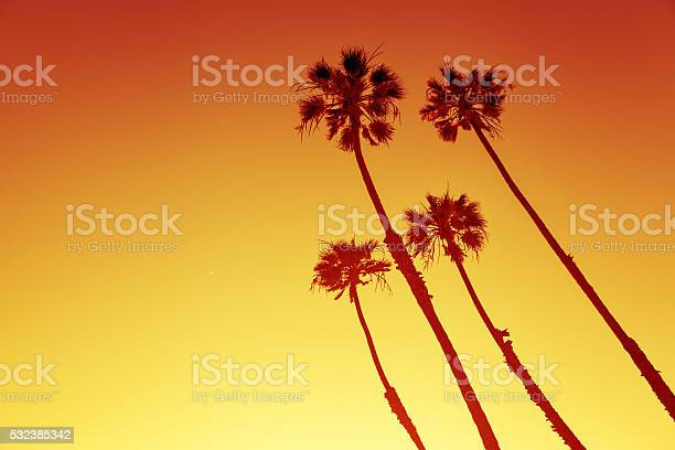 California Palms At Sunset Stock Photo - Download Image Now