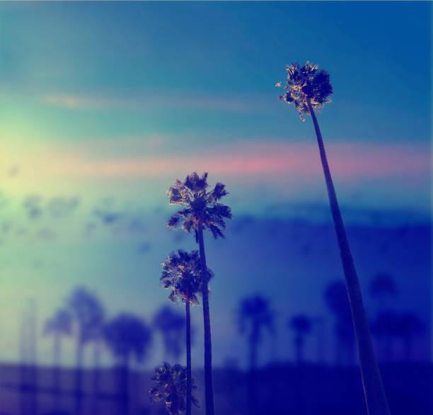 Kalifornische Palmen am blauen Himmel.  Schöne Sommervibes in Los Angeles. – Foto