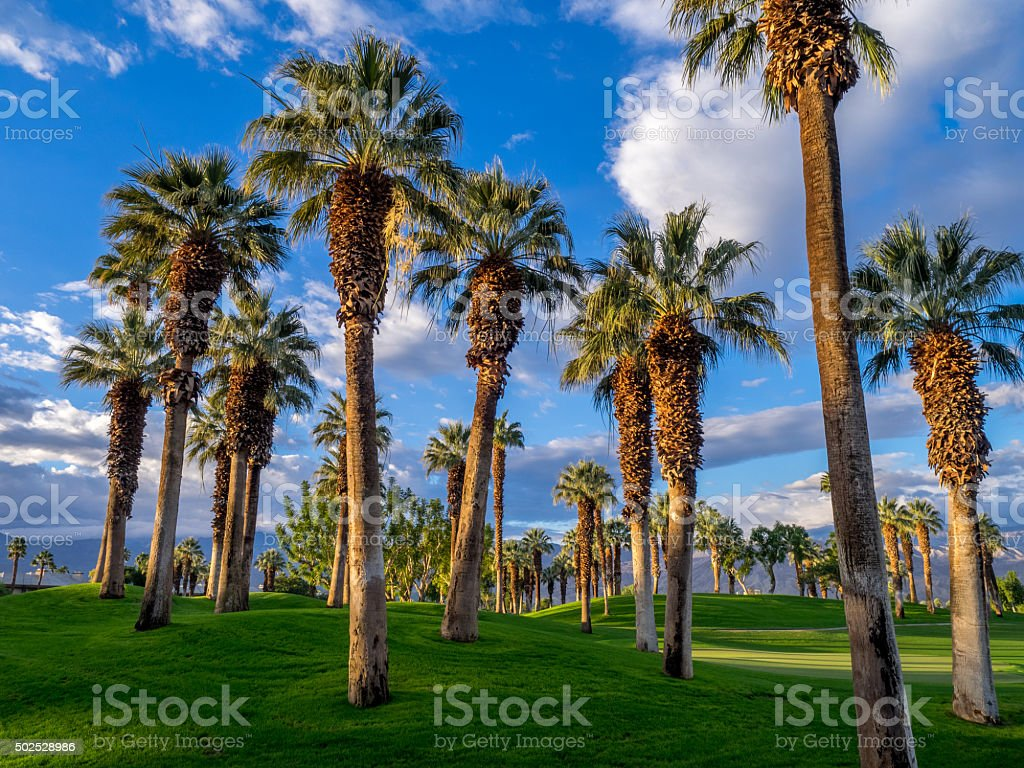 California palme, Palm Desert golf resort - foto stock