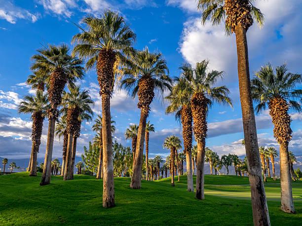 California palme, Palm Desert golf resort - foto stock