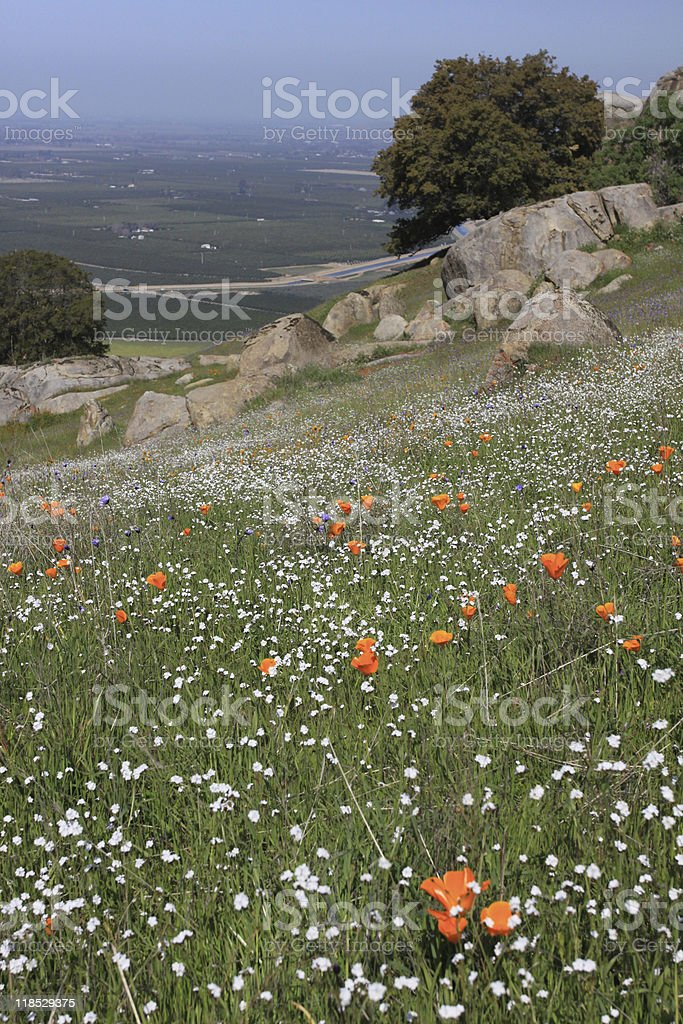 california poppies over looking san joaquin valley stock photo