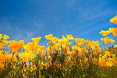 vacation get away; getting away from it all; travel adventure; desert wonderland; California springtime super bloom