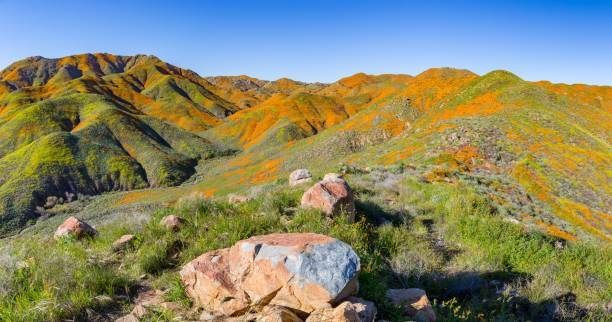 kalifornischer mohn-superblütensee elsinore wanderschlucht - süd kalifornien stock-fotos und bilder