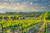 vacation getaway; wine country; rolling hills of vineyards; rows of crops; lush vegetation