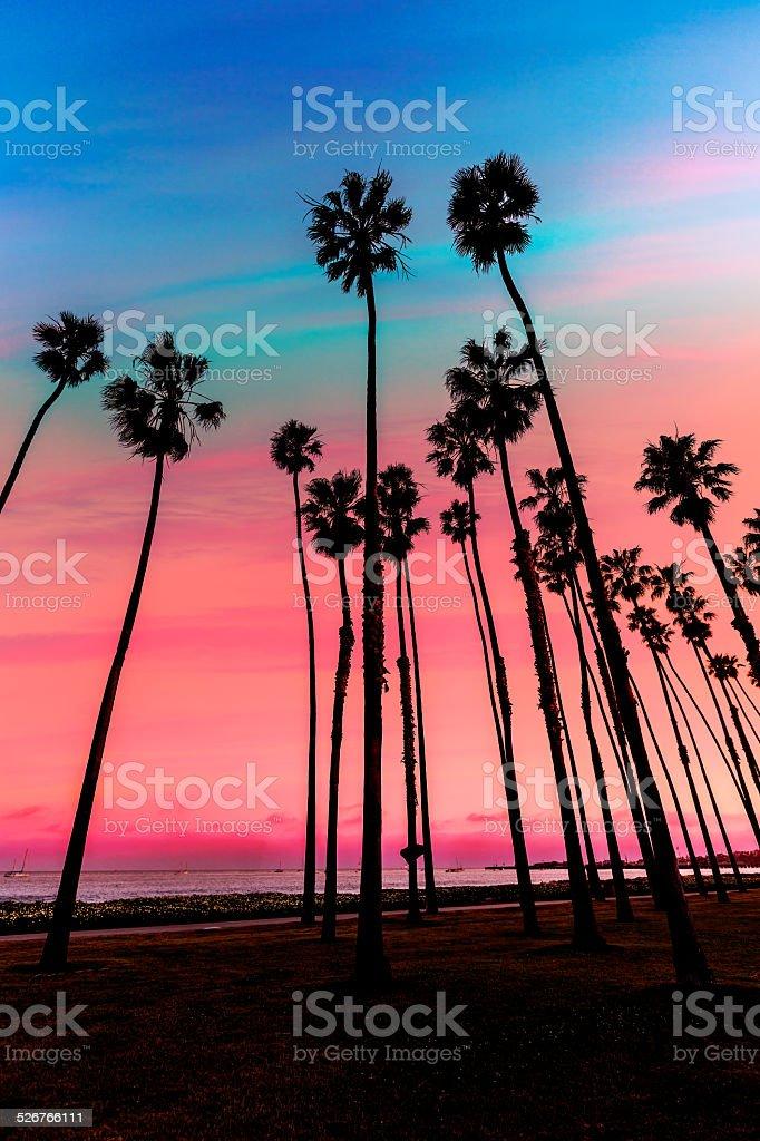 California sunset Palm tree rows in Santa Barbara California sunset Palm tree rows in Santa Barbara US Beach Stock Photo