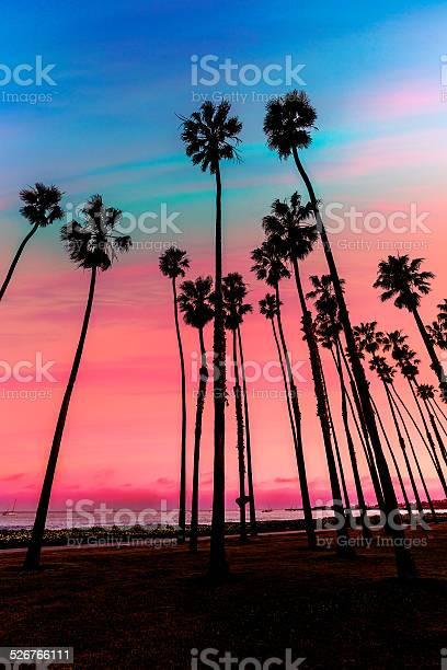 California Sunset Palm Tree Rows In Santa Barbara Stock Photo - Download Image Now