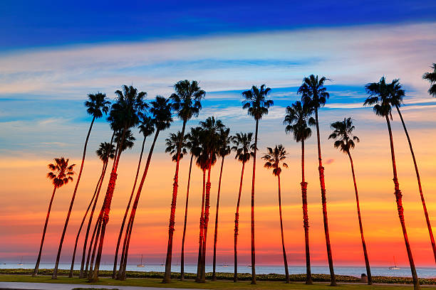 California sunset Palm tree rows in Santa Barbara California sunset Palm tree rows in Santa Barbara US santa barbara california stock pictures, royalty-free photos & images