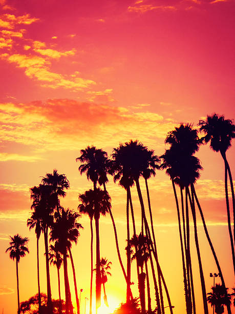 California sunset http://blogtoscano.altervista.org/LA.jpg  sunset boulevard los angeles stock pictures, royalty-free photos & images