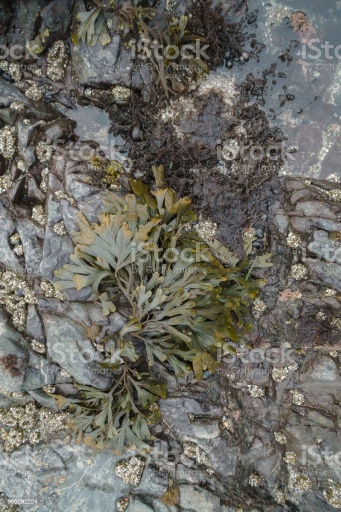 California tide pools at low tide royalty-free stock photo