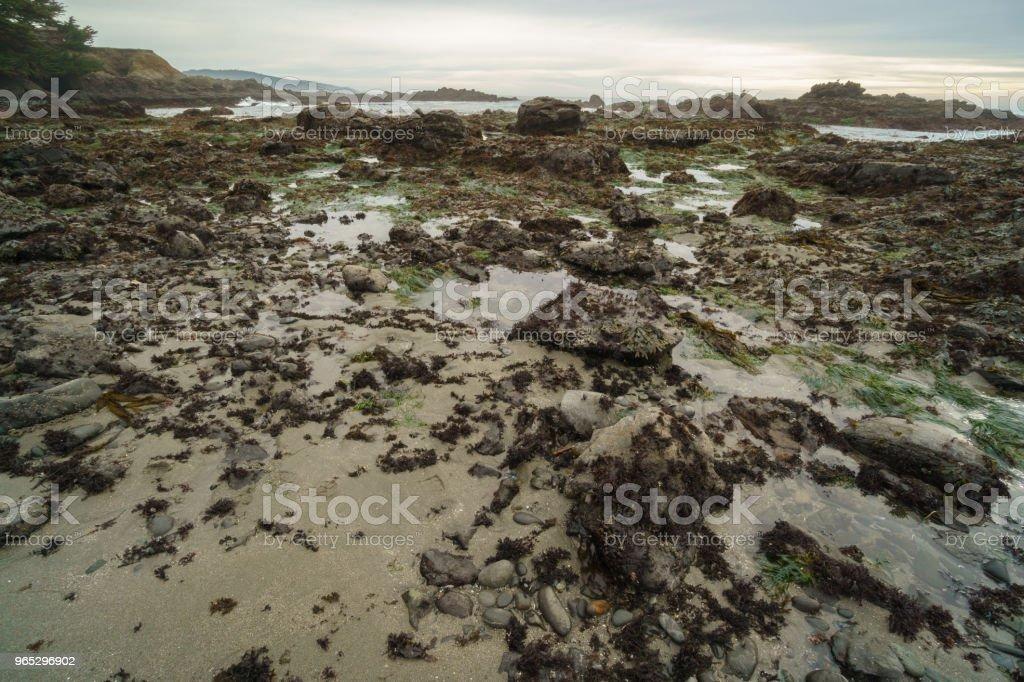 California tide pools at low tide - Zbiór zdjęć royalty-free (Basen pływowy)