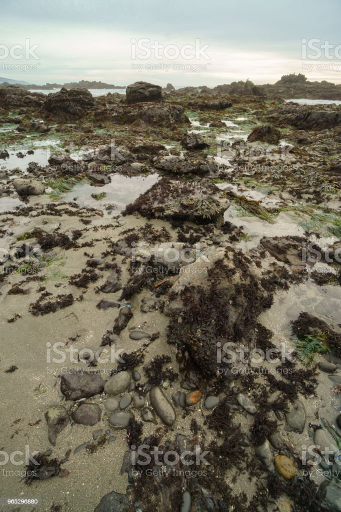 California tide pools low tide royalty-free stock photo