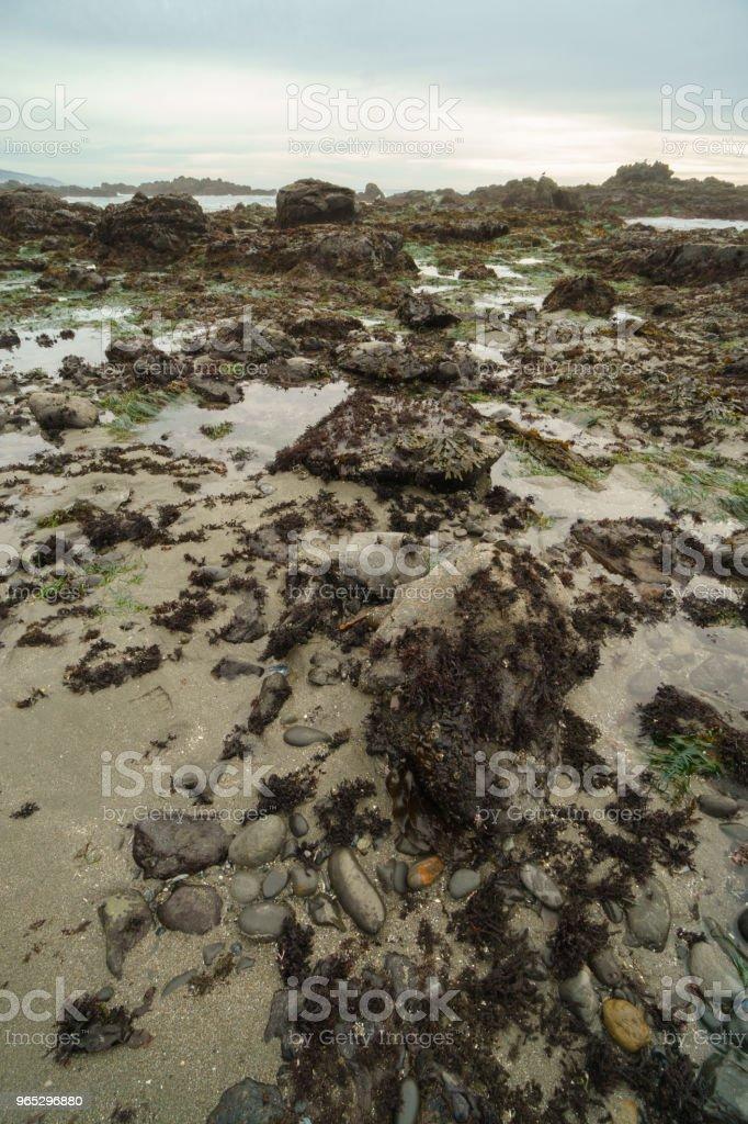 California tide pools low tide zbiór zdjęć royalty-free