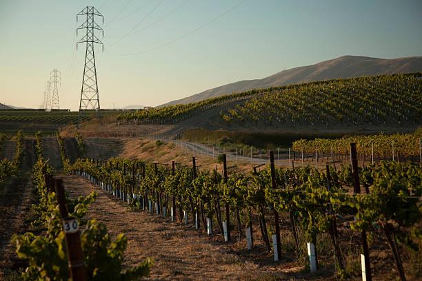 california vineyard - central coast california stock photos and pictures