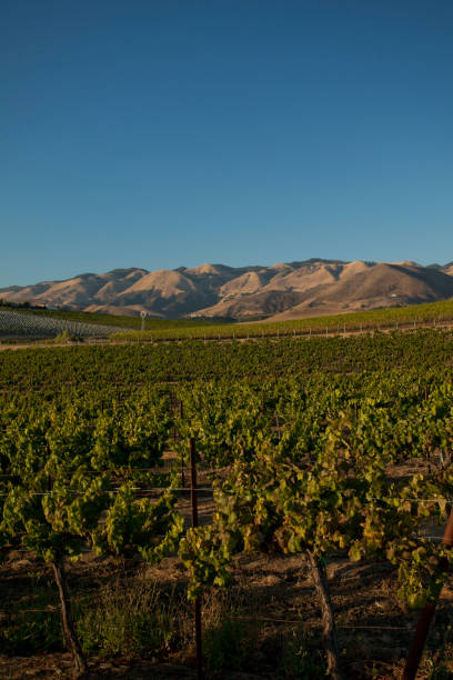 california wine country - central coast california stock photos and pictures