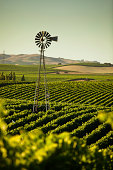 Vinyards stretch across rolling hills in the Napa/Sonoma Wine Country in Northern California