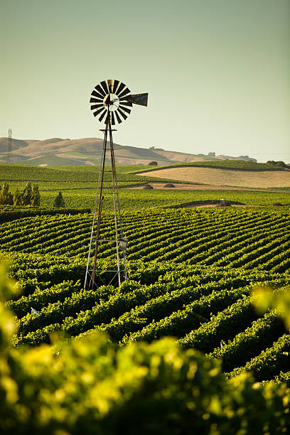 california wine country - halbergman stock pictures, royalty-free photos & images