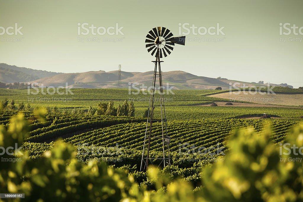 California Wine Country royalty-free stock photo
