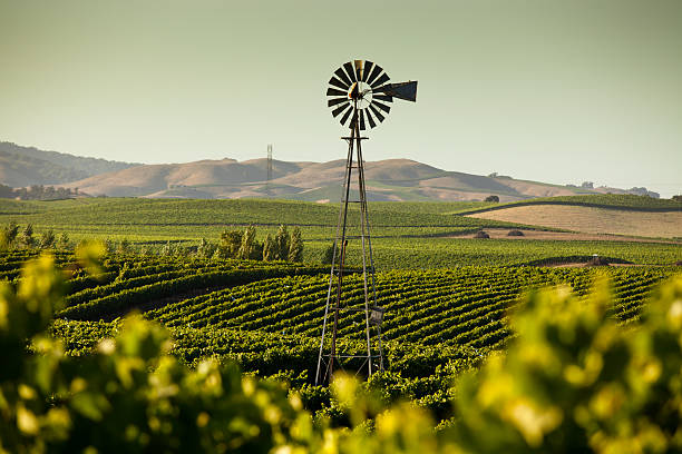 California Wine Country Vinyards stretch across rolling hills in the Napa/Sonoma Wine Country in Northern California sonoma stock pictures, royalty-free photos & images