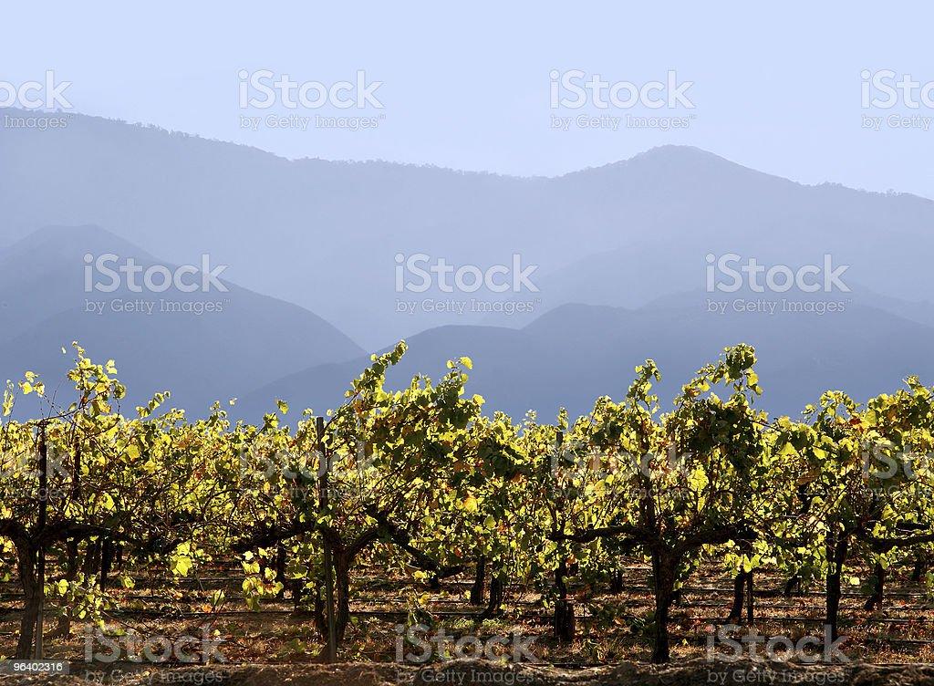 California winery royalty-free stock photo