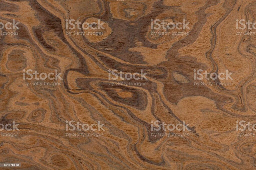 Californian walnut burl design texture. Natural background close stock photo
