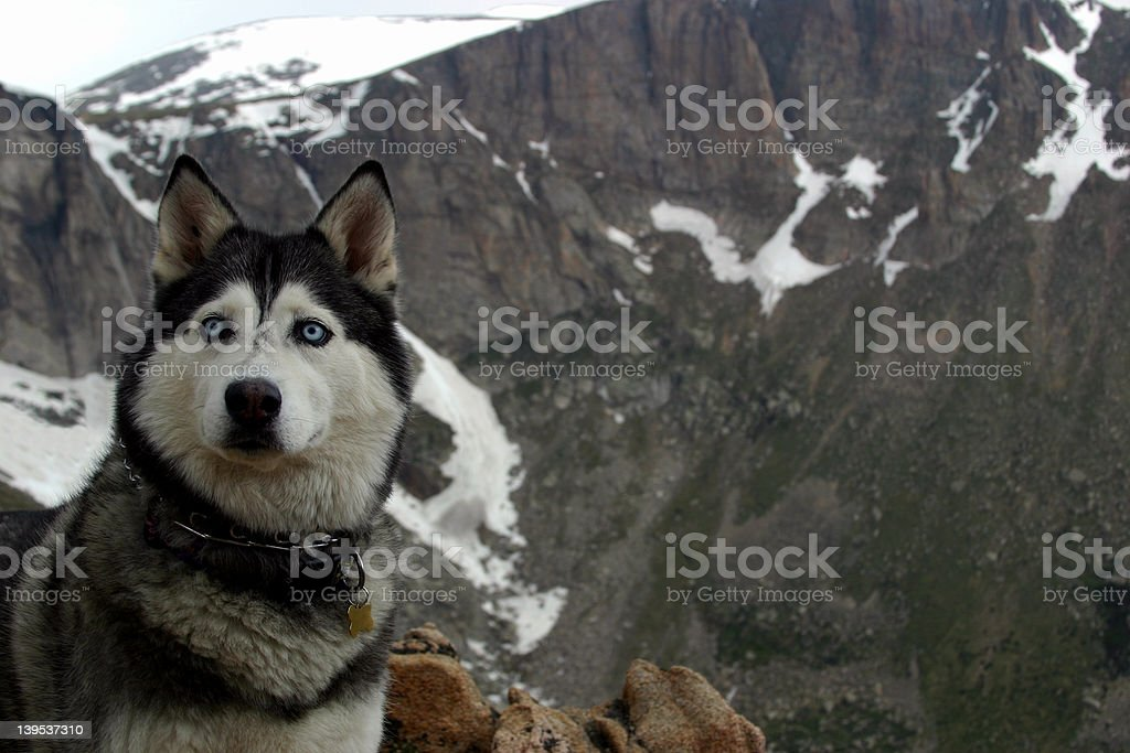 Call of the Wild royalty-free stock photo