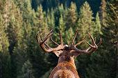 istock Call of the Wild 183765700